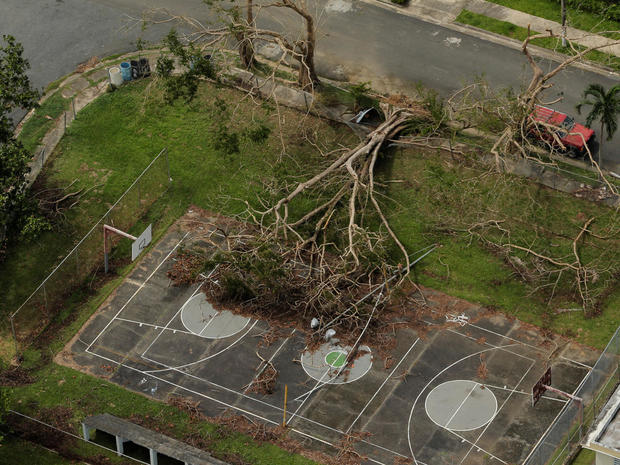 A large uprooted tree is seen on a basketball court in the aftermath of Hurricane Maria in San Sebastian, Puerto Rico
