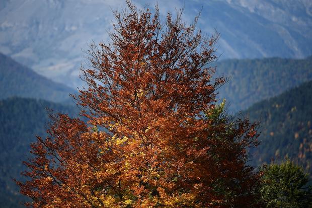 Fall foliage 2017
