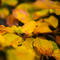 Autumn coloured leaves are pictured in the western Austrian village of Gnadenwald