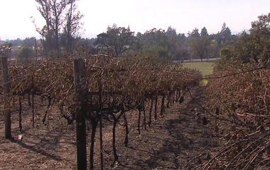 How will wildfire damage to California vineyards impact industry?