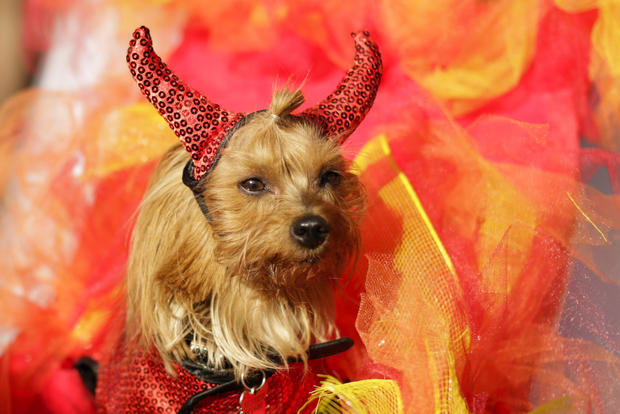 Dog costume Halloween parade in New York City