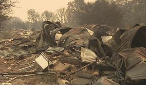 Legal marijuana crops destroyed in California wildfires