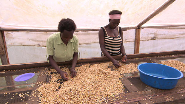 phillips-coffee-production-4-2017-11-23.jpg