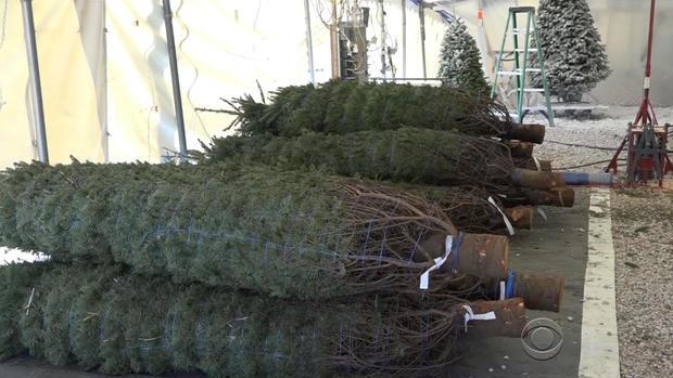 oliver-christmas-trees-2-2017-12-2.jpg