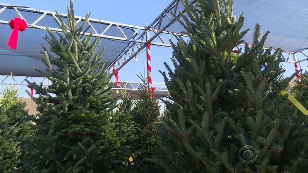 oliver-christmas-trees-2017-12-2.jpg