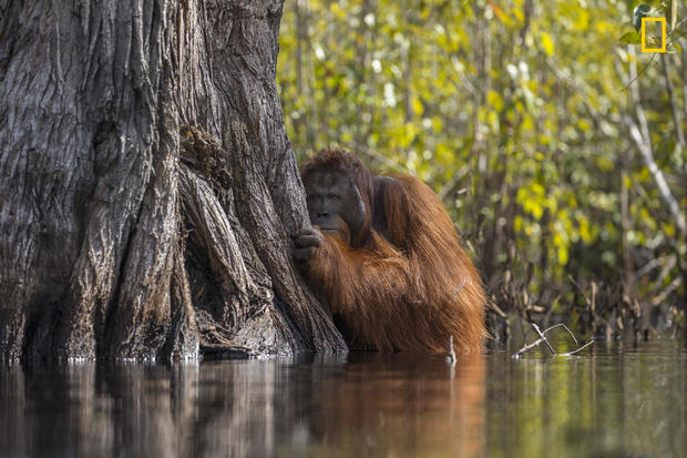 Face to face in a river in Borneo