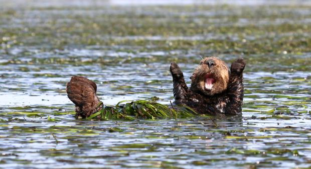 2017 Comedy Wildlife Photography Awards