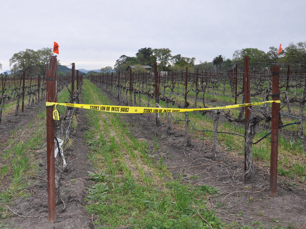 Inside Napa vineyard murder-suicide