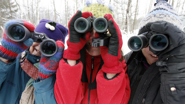 Christmas Bird Count