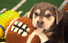 "The penalties of ""Puppy Bowl"""