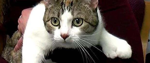 180207-cbsminnesota-28-toes-cat.jpg