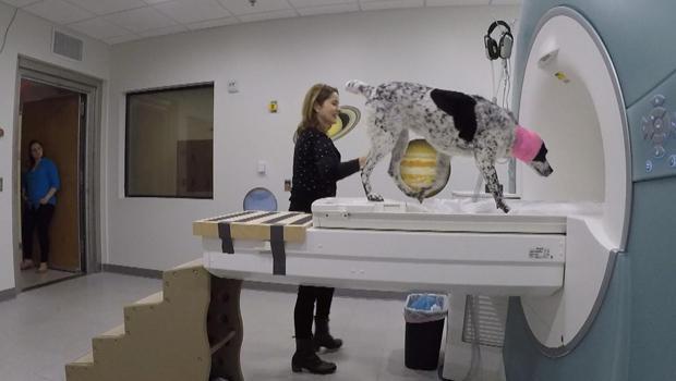 truffles-entering-am-mri-scanner-620.jpg