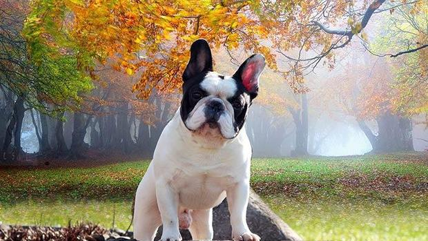 Most well-liked dog breeds in the U.S.