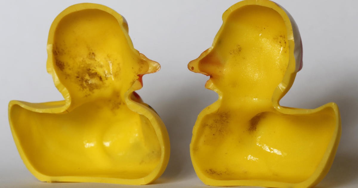 Rubber ducks may be haven for nasty germs - CBS News
