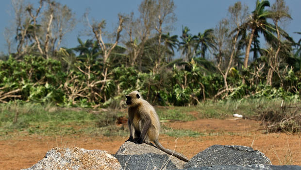 Monkey snatches baby in India, body of child found in well