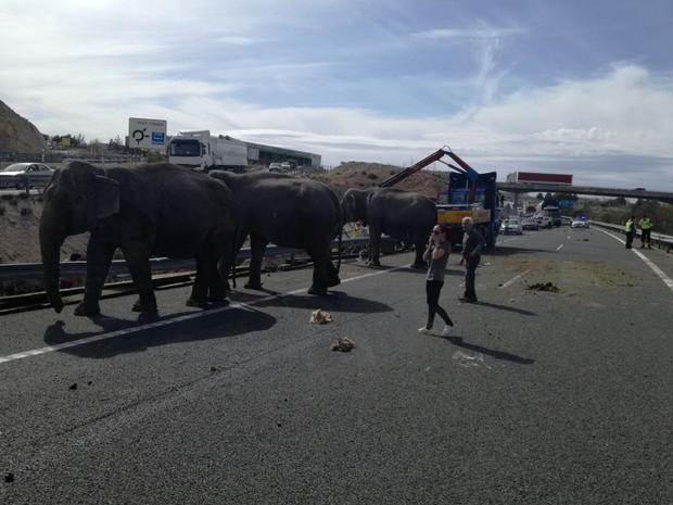Person reacts next to elephants, after circus truck that was transporting them crashed, in Pozo Canada