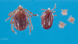 0424-health-ticks-00-00-09-29-still001-1553908-640x360.jpg
