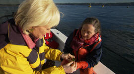 Sampling fresh-picked sea lettuce