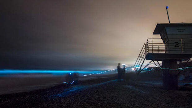 Bioluminescence From Red Tide Algae Bloom Literally Lighting Up San