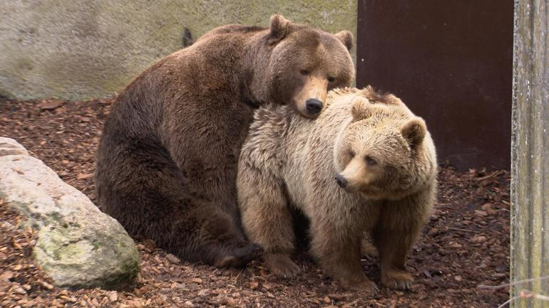 bears-hugs.jpg