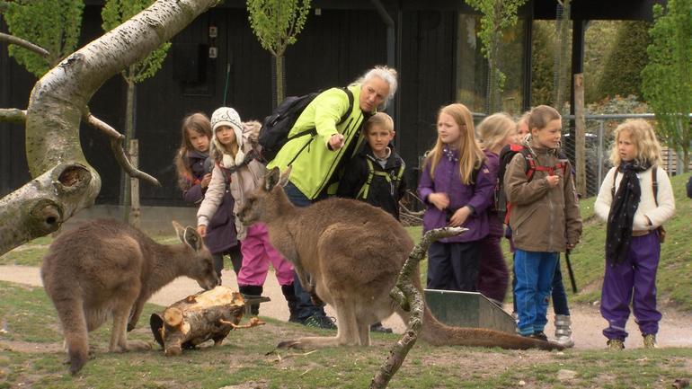 schoolkids-kangaroos.jpg