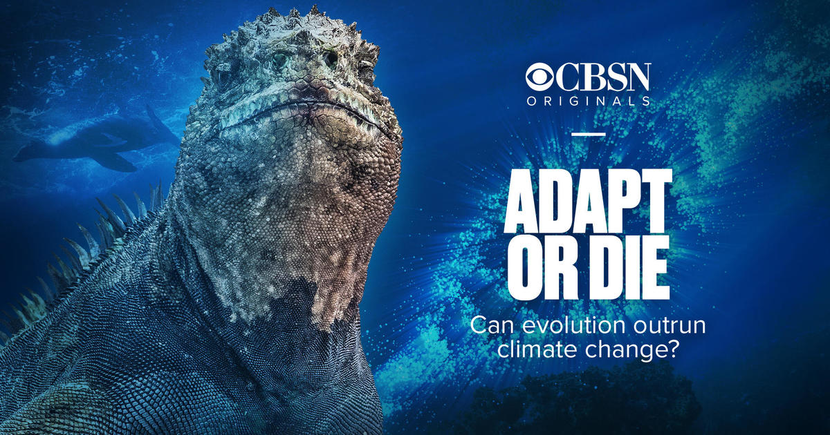 Adapt or die: Can evolution outrun climate change?