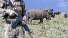 Friendly Fire, The Rhino Crisis