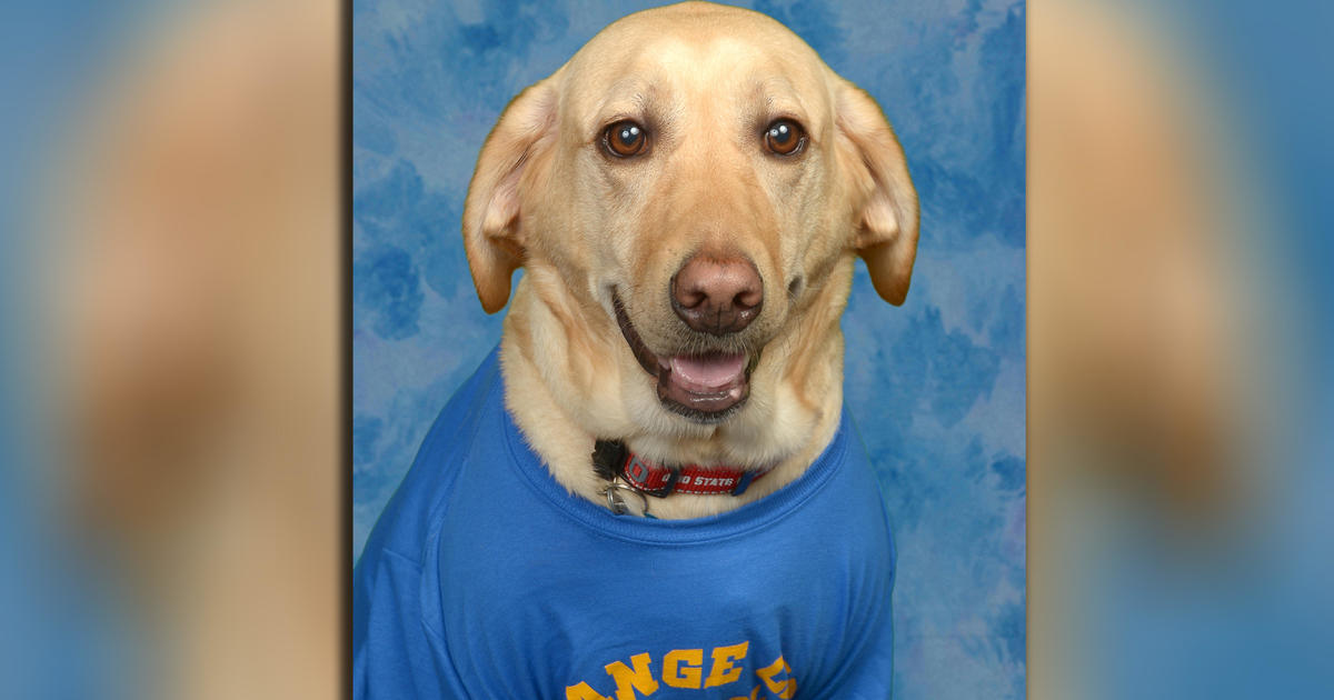 Beloved Service Dog Gets Picture In Florida Elementary