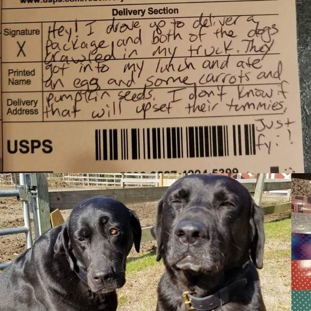 Dogs Steal Mail Carriers Lunch Then Their Apology Note Goes Viral