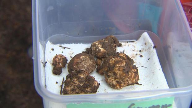 truffles-in-bin-620.jpg