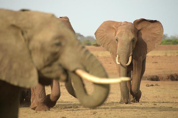 KENYA-WILDLIFE