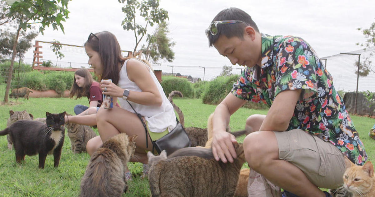 Purr-adise: Hawaii's cat sanctuary
