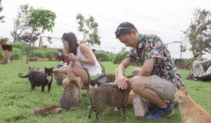 Purr-adise: Hawaii's cat sanctuary