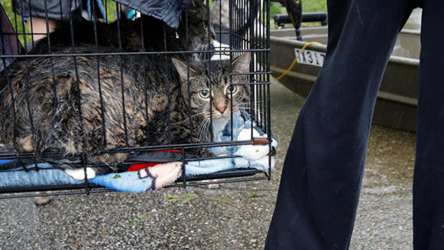 Sodden cats are brought to a boat by their owner as they are rescued from rising flood waters in the aftermath of Hurricane Florence, in Leland, North Carolina
