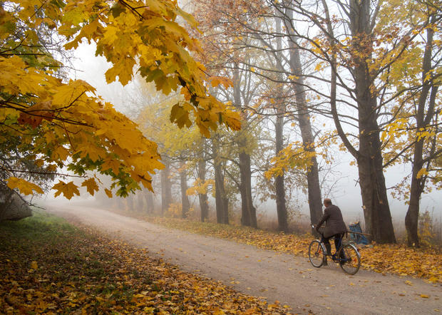 Autumn colours are seen on foliage in the village of Danilovichi