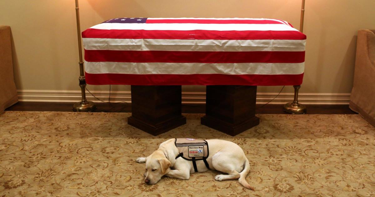 The story behind George H.W. Bush's service dog – and what his future holds