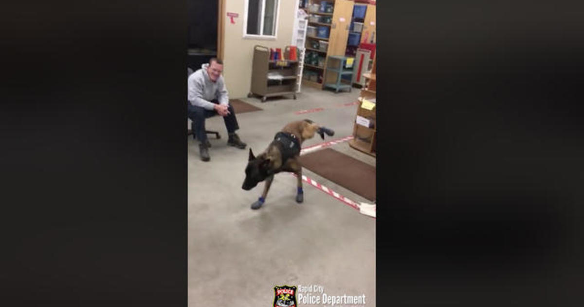 Police Dog Gets New Snow Booties In Hilarious Viral Video Cbs News