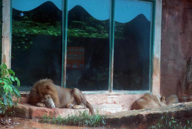 Puerto Rico Zoo in Crisis