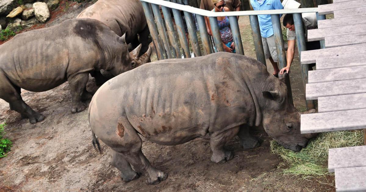 Child falls into rhino exhibit at Brevard Zoo in Melbourne, Florida