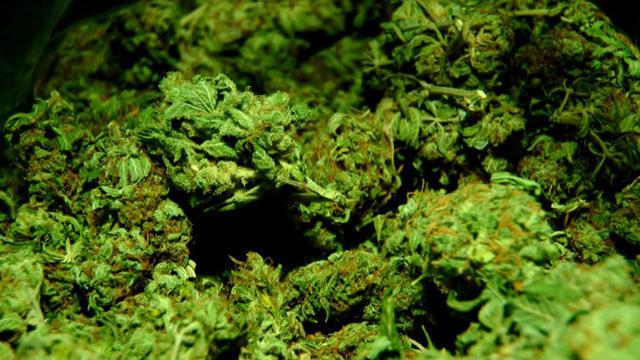 0112-cbsn-cannabisfilmfestival-1756679-640x360.jpg