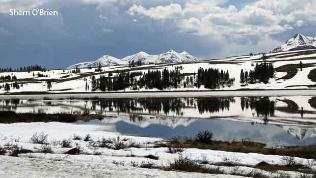 yellowstone-national-park-ice-on-lake-sherri-obrien-620.jpg