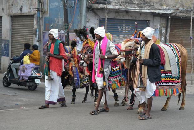 INDIA-RELIGION-HINDUISM-FESTIVAL-COW