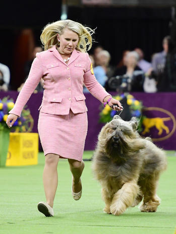 Westminster Kennel Club Dog Show 2019
