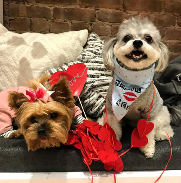 These pups, also known as appletheyorkie1 and _toby_the_doggy_ on Instagram, dressed for the occasion.MONICA MAMANI