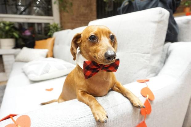This pup, known as edgar_the_wiener on Instagram, came dressed to impress. MARIKO MIYAKE