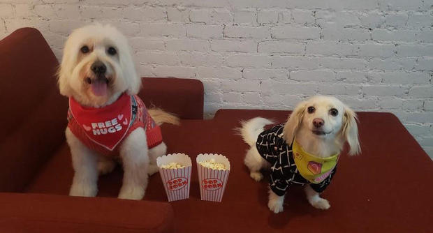 "These dogs, known as codycuddlebug and lifewithpenny on Instagram, settle in to watch Disney's ""Lady and the Tramp"" at the event. MARIKO MIYAKE"