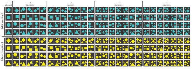 bees-and-math-testing-stimuli-620.jpg