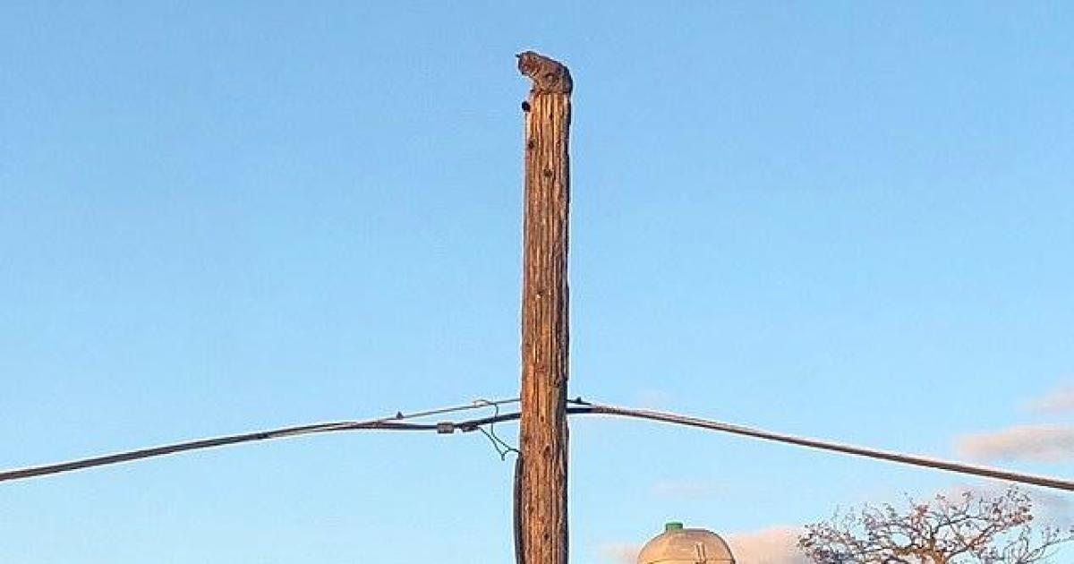 cbsnews.com - Verizon suspends worker who rescued cat from telephone pole