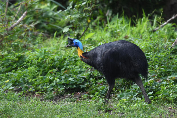 Exotic, risky  bird kills owner in Florida