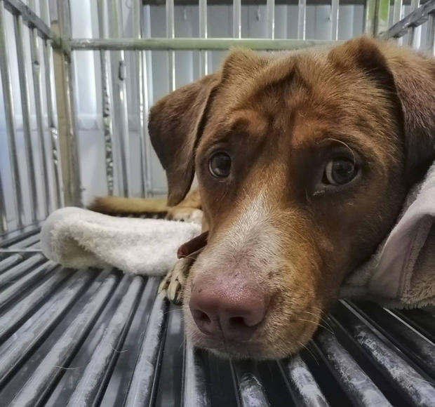 Thailand Rescued Dog